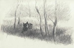 Bodor Z.: Vadcseresznye fák árnyékában (ceruza, papír, 145x222 mm)